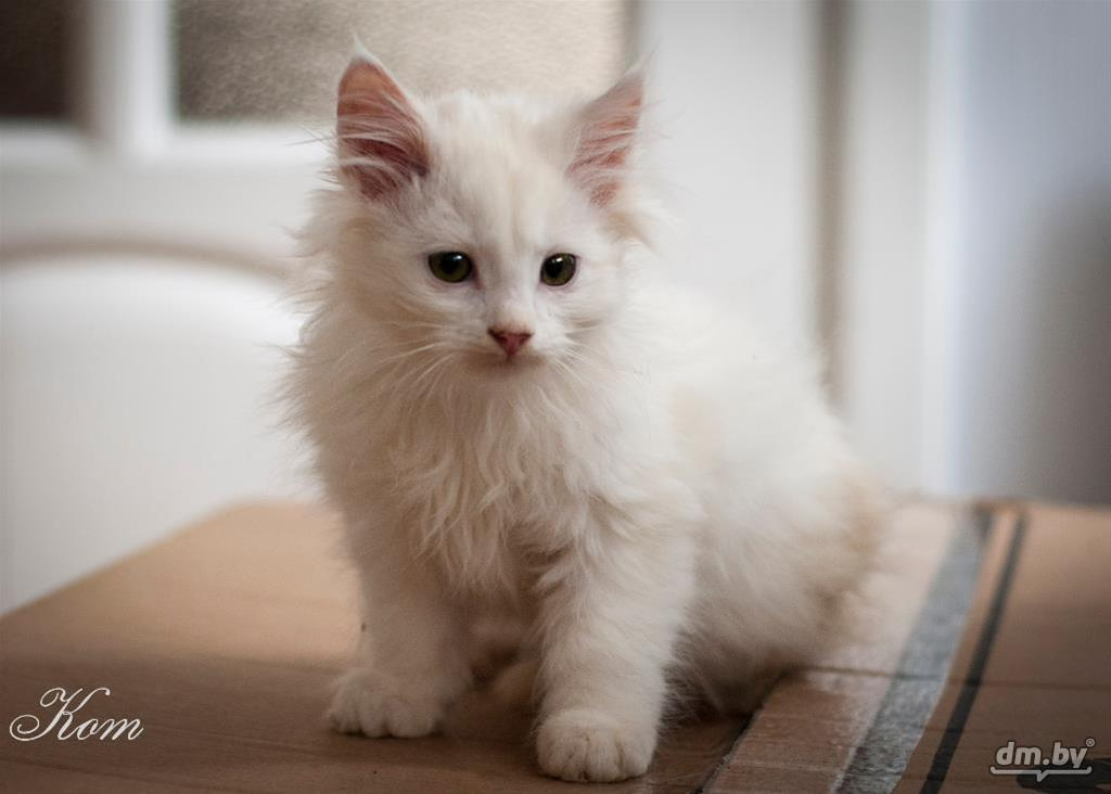 фото беспородного белого котенка рельеф рисунка бывает
