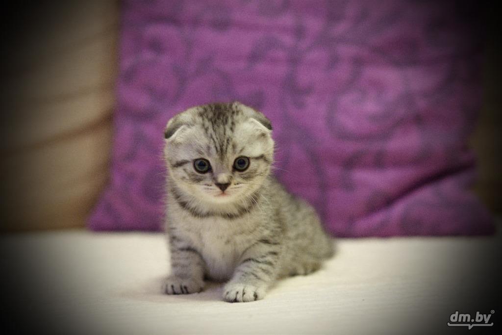картинки маленькие котята вислоухие котята обезьяна